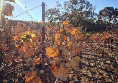 alma rosa winery